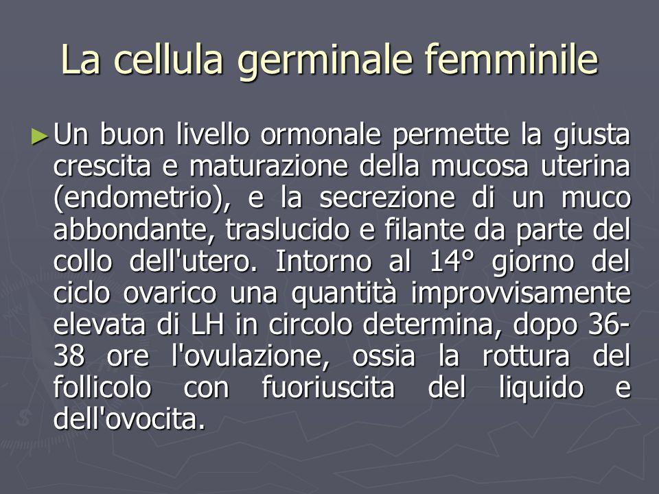 La cellula germinale femminile Un buon livello ormonale permette la giusta crescita e maturazione della mucosa uterina (endometrio), e la secrezione d