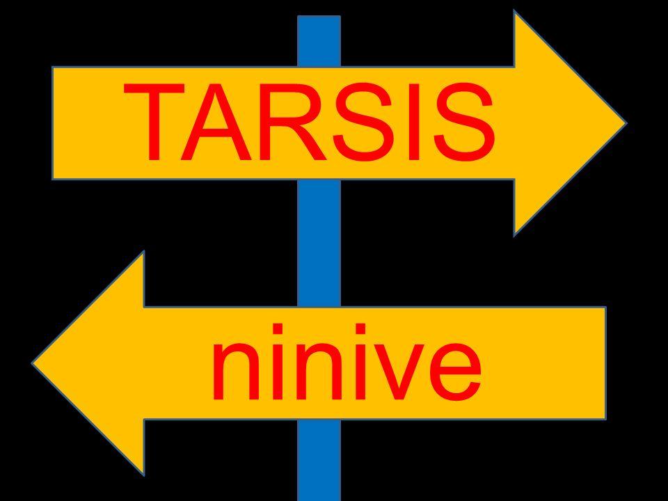 TARSIS ninive