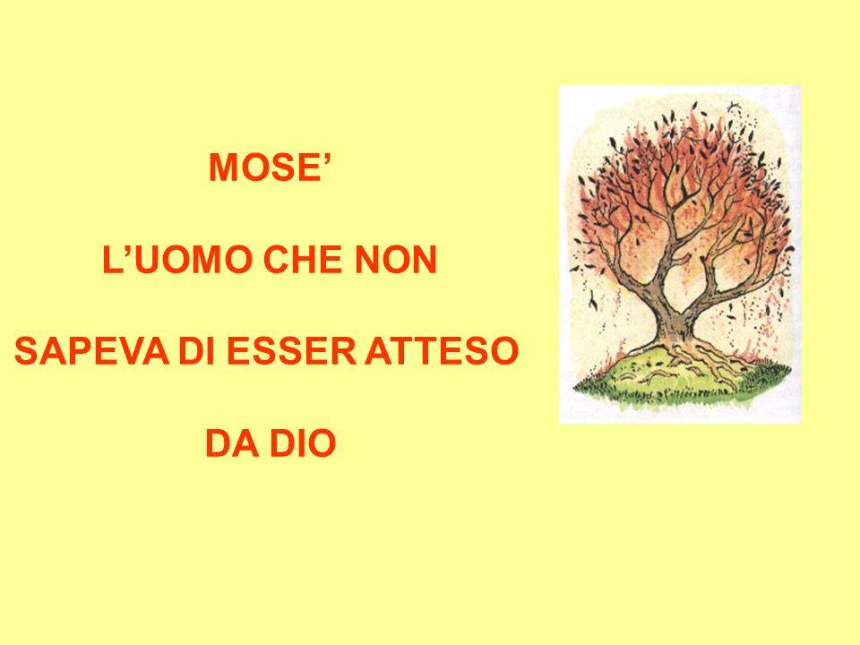E proprio da quel roveto fece la conoscenza di un DIO: che lo chiamava per nome :Mosè, Mosè.