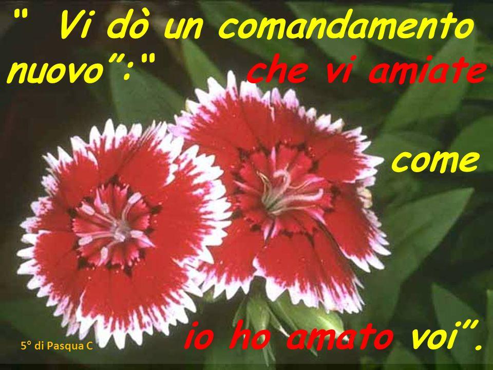 Vi dò un comandamento nuovo: che vi amiate come io ho amato voi. 5° di Pasqua C