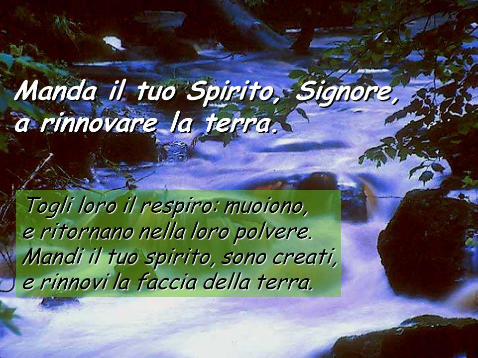 Salmo 103 Manda il tuo Spirito, Signore, a rinnovare la terra. Manda il tuo Spirito, Signore, a rinnovare la terra. Benedici il Signore, anima mia! Se