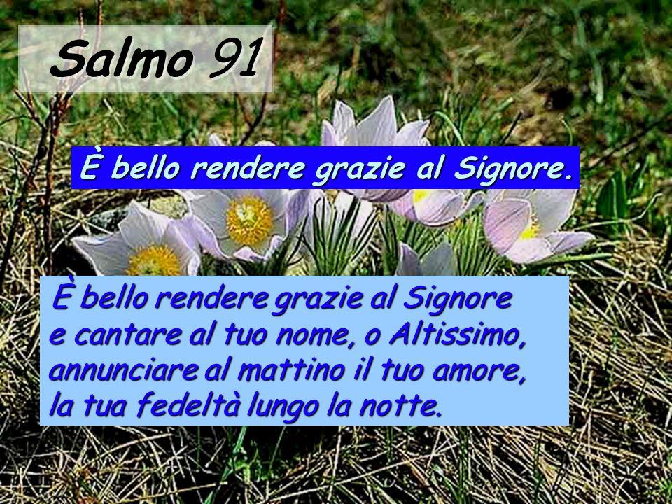 Il giusto fiorirà come palma, crescerà come cedro del Libano; piantati nella casa del Signore, fioriranno negli atri del nostro Dio.