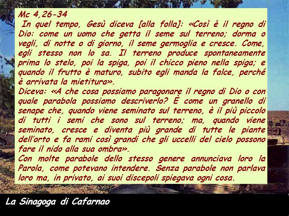 La Sinagoga di Cafarnao Mc 4,26-34 In quel tempo, Gesù diceva [alla folla]: «Così è il regno di Dio: come un uomo che getta il seme sul terreno; dorma