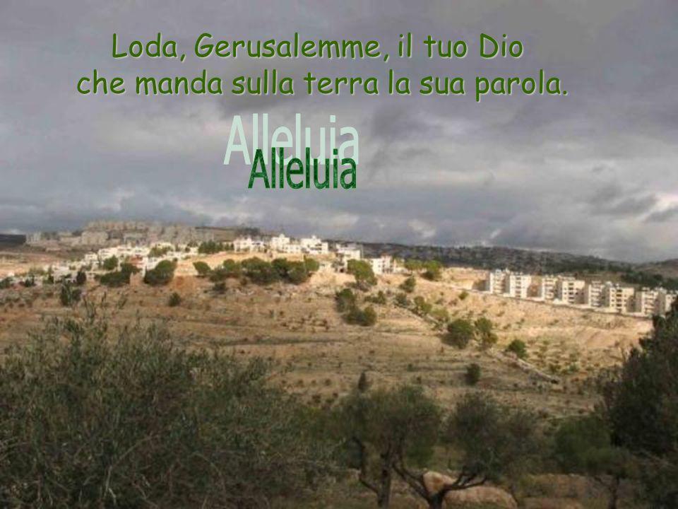 Loda, Gerusalemme, il tuo Dio che manda sulla terra la sua parola.