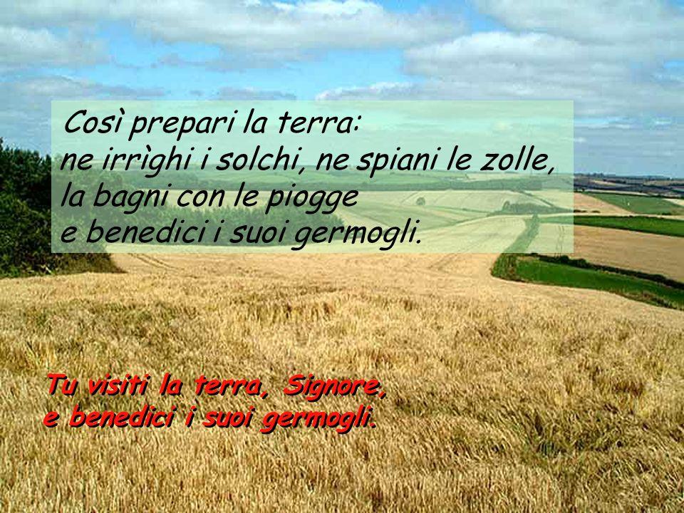 Così prepari la terra: ne irrìghi i solchi, ne spiani le zolle, la bagni con le piogge e benedici i suoi germogli. Tu visiti la terra, Signore, e bene