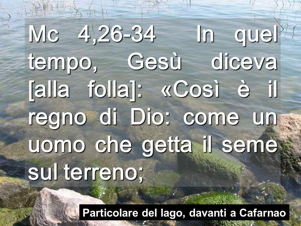 Mc 4,26-34 In quel tempo, Gesù diceva [alla folla]: «Così è il regno di Dio: come un uomo che getta il seme sul terreno; Particolare del lago, davanti a Cafarnao