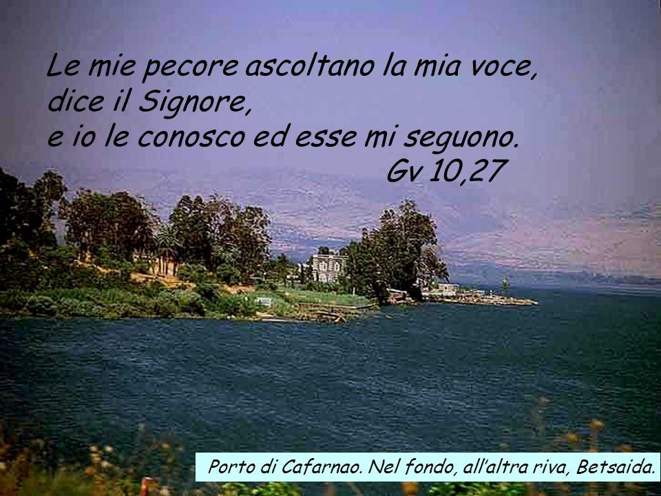 Le mie pecore ascoltano la mia voce, dice il Signore, e io le conosco ed esse mi seguono.