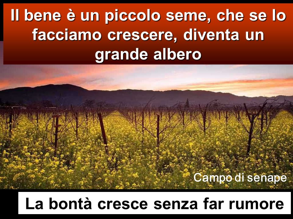 Il bene è un piccolo seme, che se lo facciamo crescere, diventa un grande albero La bontà cresce senza far rumore Campo di senape
