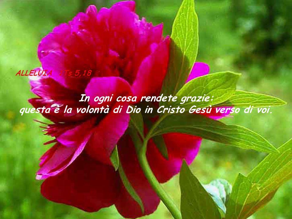 ALLELUIA 1Ts 5,18 In ogni cosa rendete grazie: questa è la volontà di Dio in Cristo Gesù verso di voi.