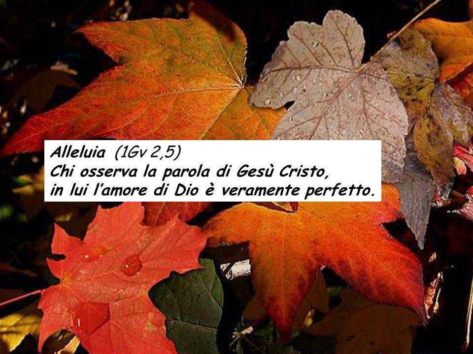 Alleluia (1Gv 2,5) Chi osserva la parola di Gesù Cristo, in lui lamore di Dio è veramente perfetto.