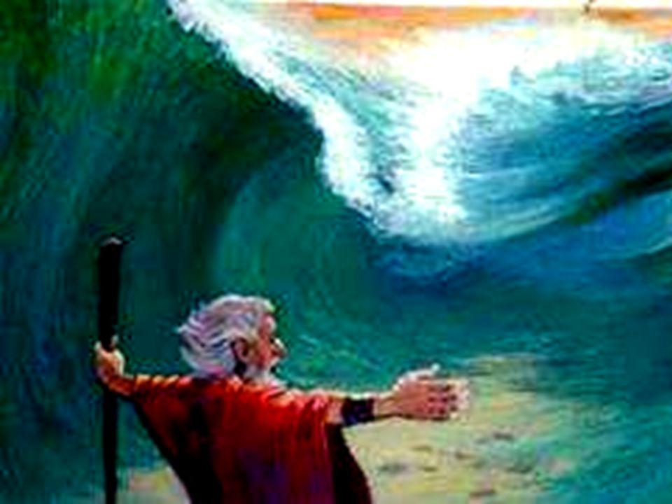Grandi cose ha fatto il Signore per noi, ha fatto germogliare fiori fra le rocce.