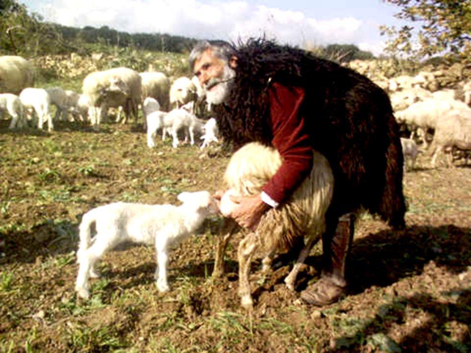1Dice il Signore: «Guai ai pastori che fanno perire e disperdono il gregge del mio pascolo.