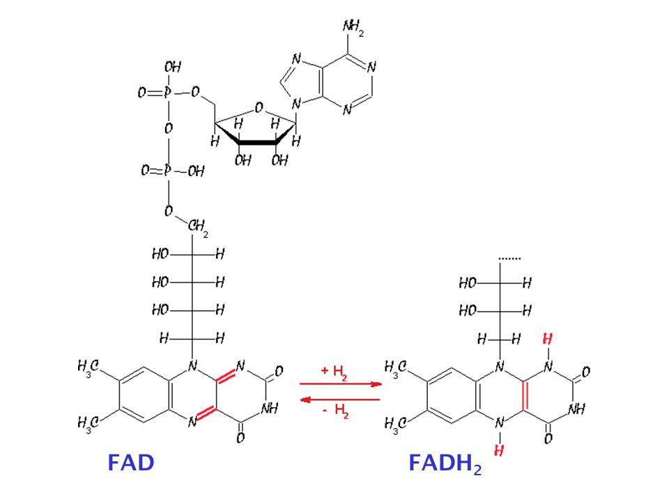 FADFADH 2