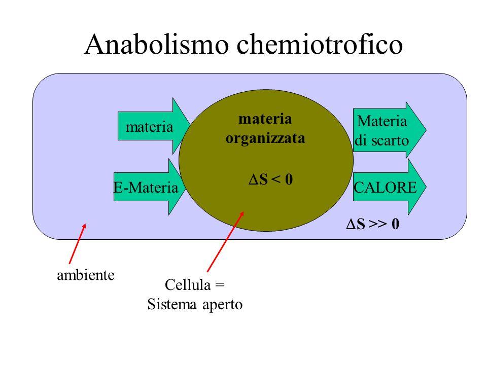 E-Materia materia organizzata Materia di scarto CALORE S < 0 Cellula = Sistema aperto ambiente S >> 0 Anabolismo chemiotrofico