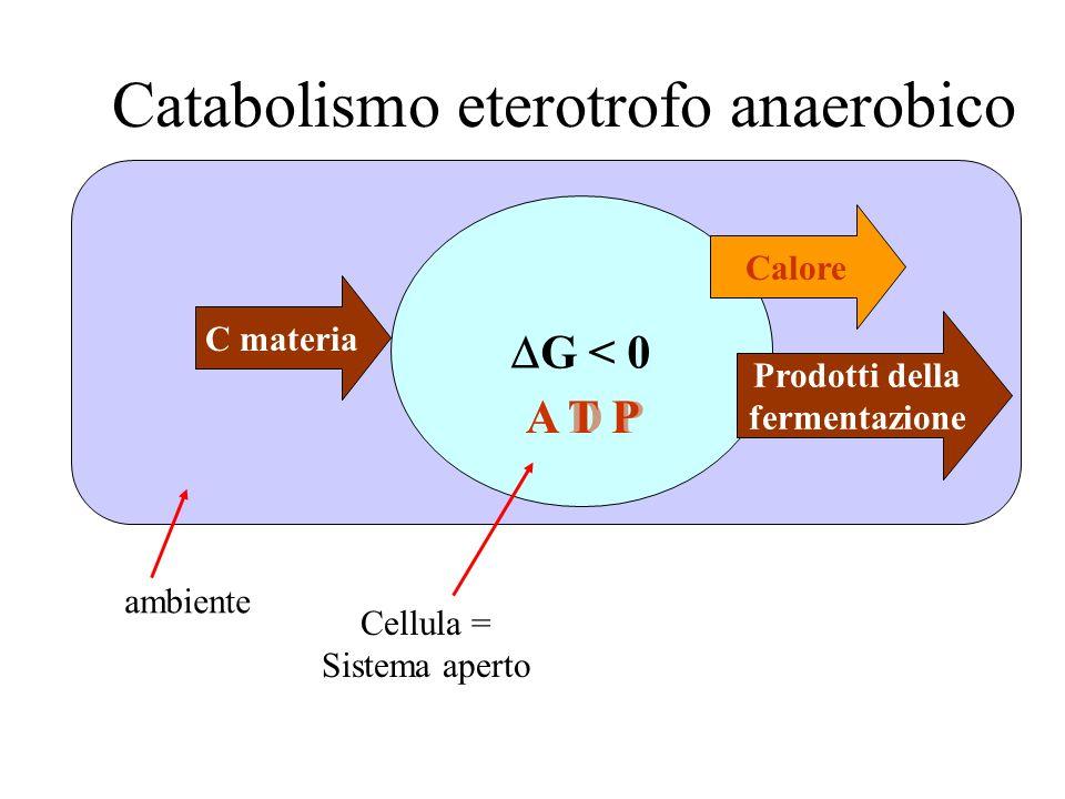 C materia G < 0 Cellula = Sistema aperto ambiente Catabolismo eterotrofo anaerobico Calore Prodotti della fermentazione A D PA T P