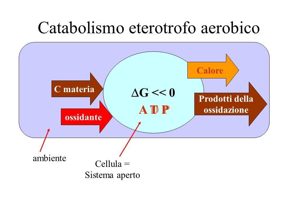 C materia G << 0 Cellula = Sistema aperto ambiente Catabolismo eterotrofo aerobico Calore Prodotti della ossidazione A D PA T P ossidante