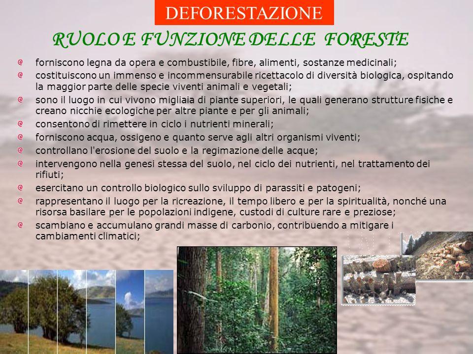 DEFORESTAZIONE RUOLO E FUNZIONE DELLE FORESTE forniscono legna da opera e combustibile, fibre, alimenti, sostanze medicinali; costituiscono un immenso e incommensurabile ricettacolo di diversità biologica, ospitando la maggior parte delle specie viventi animali e vegetali; sono il luogo in cui vivono migliaia di piante superiori, le quali generano strutture fisiche e creano nicchie ecologiche per altre piante e per gli animali; consentono di rimettere in ciclo i nutrienti minerali; forniscono acqua, ossigeno e quanto serve agli altri organismi viventi; controllano l erosione del suolo e la regimazione delle acque; intervengono nella genesi stessa del suolo, nel ciclo dei nutrienti, nel trattamento dei rifiuti; esercitano un controllo biologico sullo sviluppo di parassiti e patogeni; rappresentano il luogo per la ricreazione, il tempo libero e per la spiritualità, nonché una risorsa basilare per le popolazioni indigene, custodi di culture rare e preziose; scambiano e accumulano grandi masse di carbonio, contribuendo a mitigare i cambiamenti climatici;