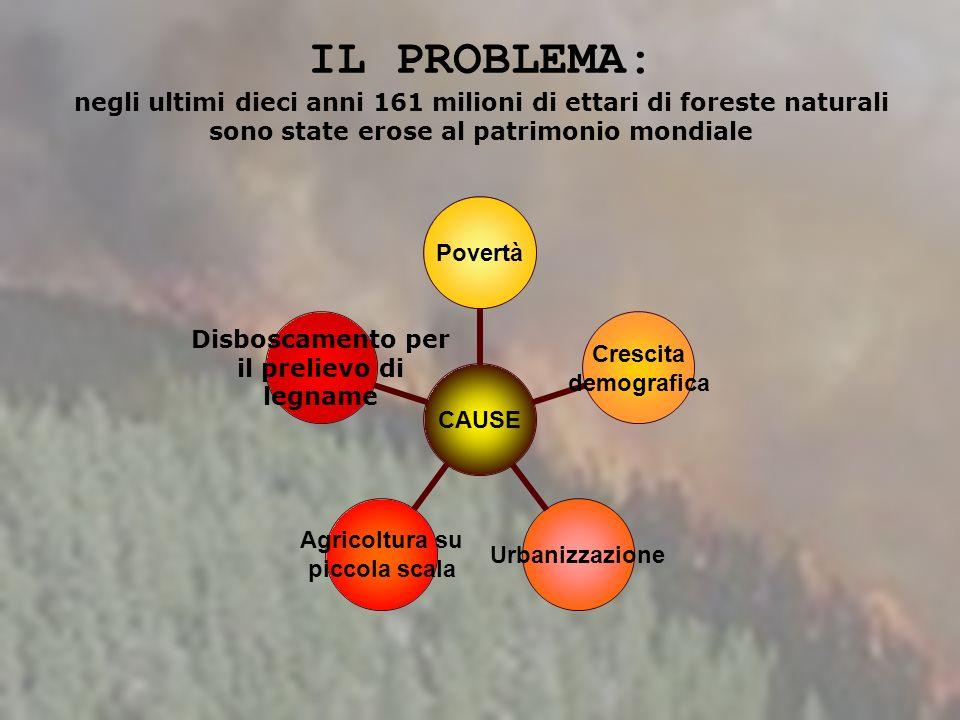 IL PROBLEMA: negli ultimi dieci anni 161 milioni di ettari di foreste naturali sono state erose al patrimonio mondiale CAUSE Povertà Crescita demograf