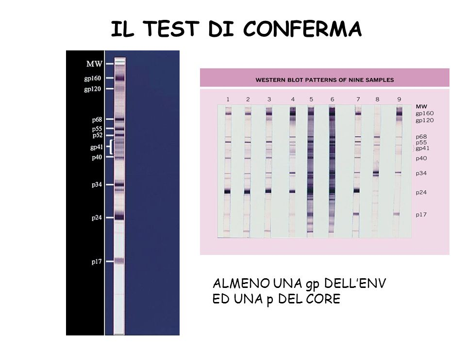 IL TEST DI CONFERMA ALMENO UNA gp DELLENV ED UNA p DEL CORE