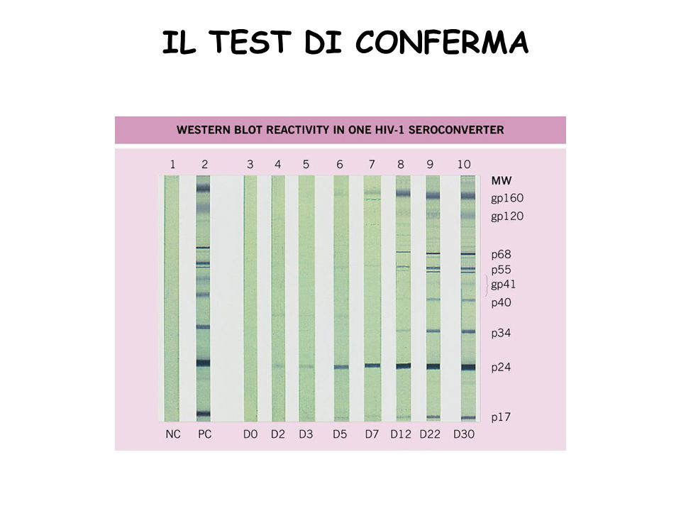 IL TEST DI CONFERMA