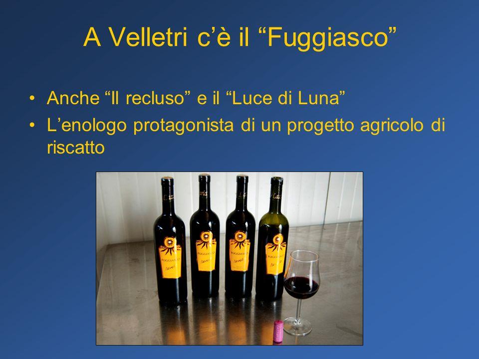 A Velletri cè il Fuggiasco Anche Il recluso e il Luce di Luna Lenologo protagonista di un progetto agricolo di riscatto