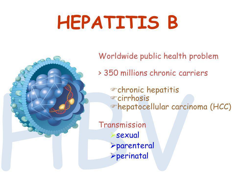 HBV HEPATITIS B Worldwide public health problem > 350 millions chronic carriers chronic hepatitis cirrhosis hepatocellular carcinoma (HCC) Transmissio
