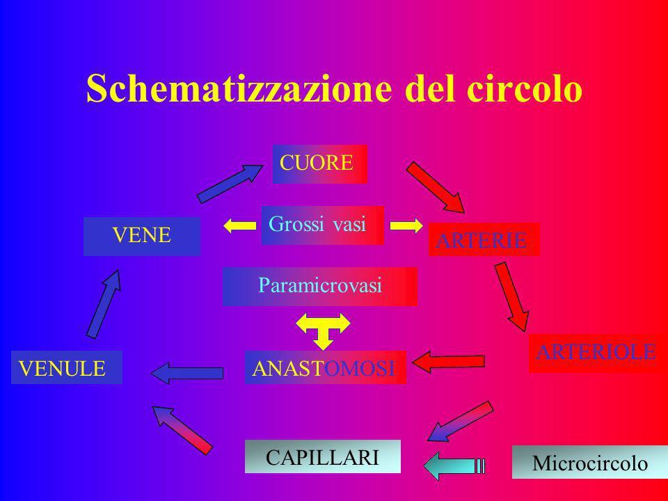 Schematizzazione del circolo CUORE CAPILLARI ANASTOMOSI ARTERIE VENULE ARTERIOLE VENE Grossi vasi Paramicrovasi Microcircolo