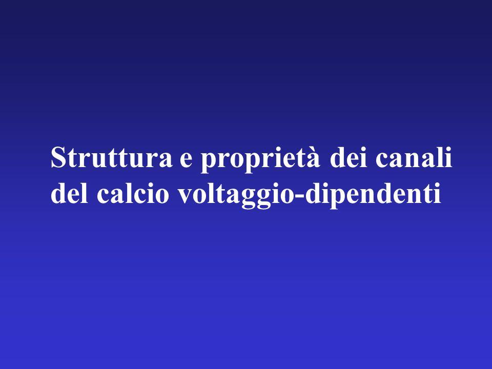 Struttura e proprietà dei canali del calcio voltaggio-dipendenti