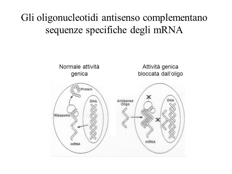 Normale attività genica Attività genica bloccata dalloligo Gli oligonucleotidi antisenso complementano sequenze specifiche degli mRNA