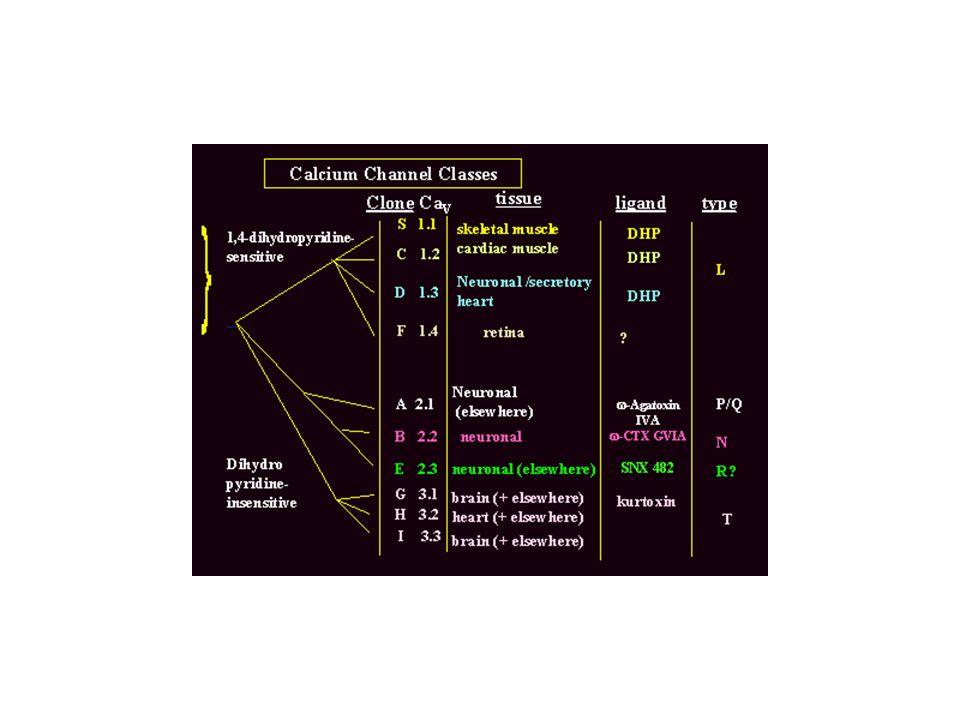 Inibizione della corrente mediata dallattivazione del GPCR Riduzione dellinibizione