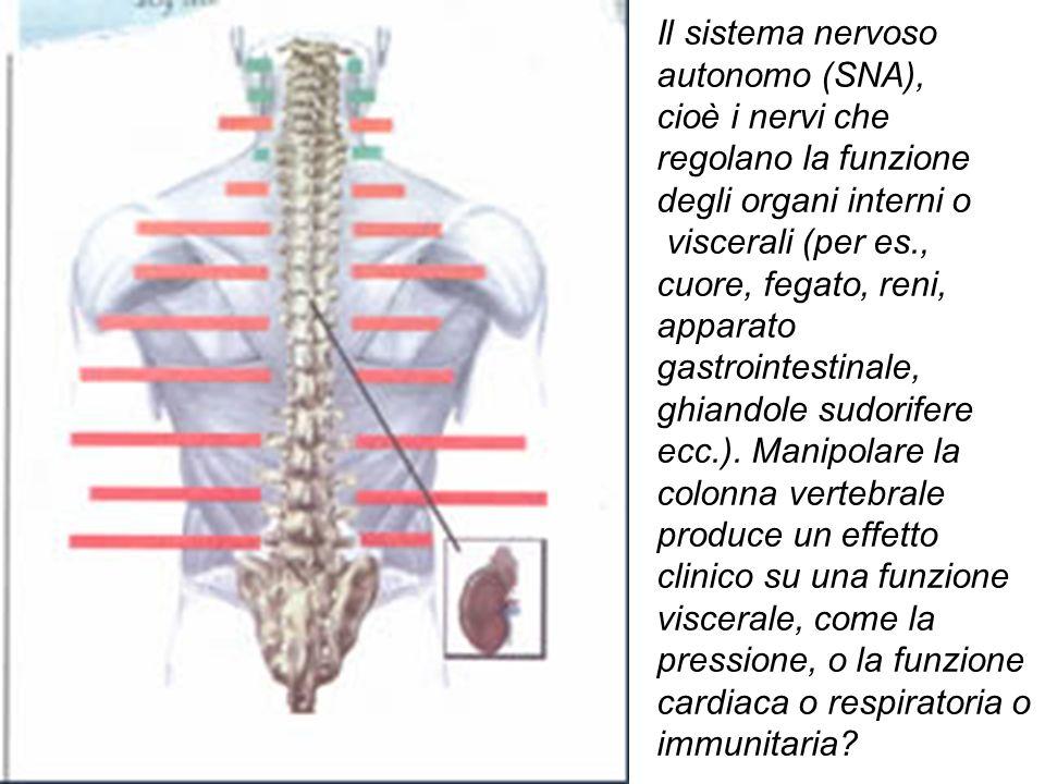 Il sistema nervoso autonomo (SNA), cioè i nervi che regolano la funzione degli organi interni o viscerali (per es., cuore, fegato, reni, apparato gast
