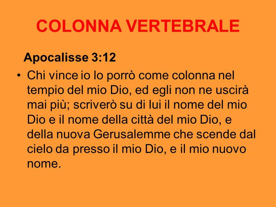 COLONNA VERTEBRALE Apocalisse 3:12 Chi vince io lo porrò come colonna nel tempio del mio Dio, ed egli non ne uscirà mai più; scriverò su di lui il nom