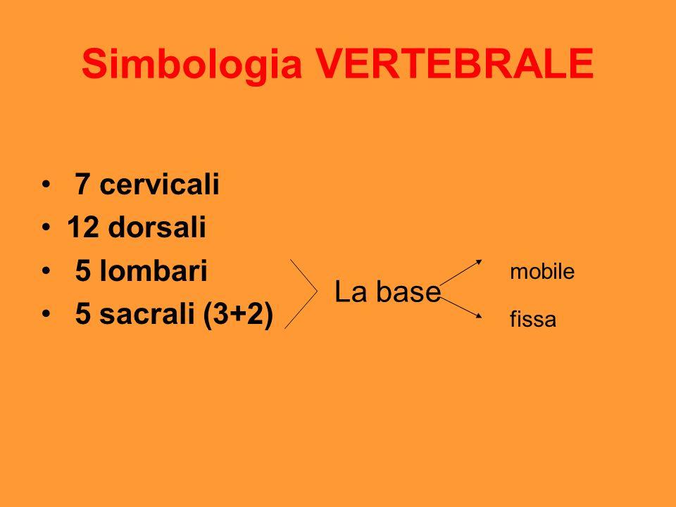 Simbologia VERTEBRALE 7 cervicali 12 dorsali 5 lombari 5 sacrali (3+2) La base mobile fissa