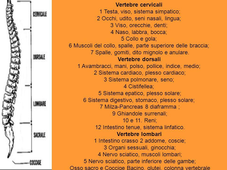 Vertebre cervicali 1 Testa, viso, sistema simpatico; 2 Occhi, udito, seni nasali, lingua; 3 Viso, orecchie, denti; 4 Naso, labbra, bocca; 5 Collo e go