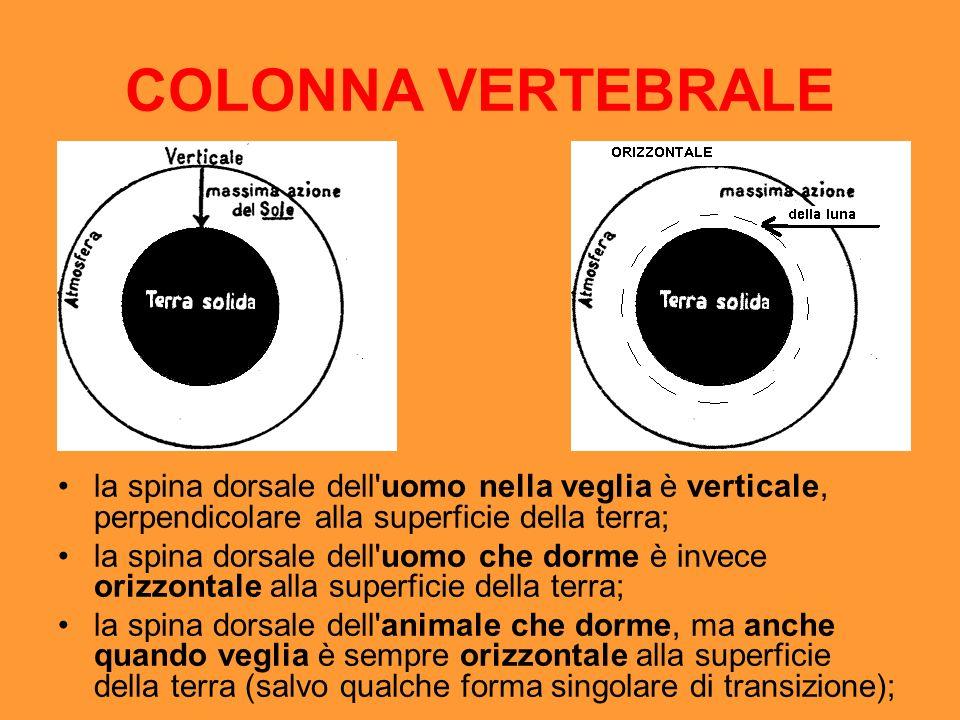 COLONNA VERTEBRALE la spina dorsale dell'uomo nella veglia è verticale, perpendicolare alla superficie della terra; la spina dorsale dell'uomo che dor