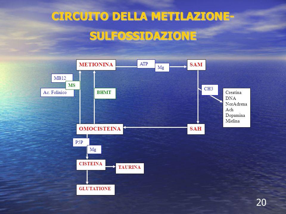 CIRCUITO DELLA METILAZIONE- SULFOSSIDAZIONE 20 METIONINASAM SAH TAURINA GLUTATIONE CISTEINA Creatina DNA NorAdrena Ach Dopamina Mielina OMOCISTEINA P5