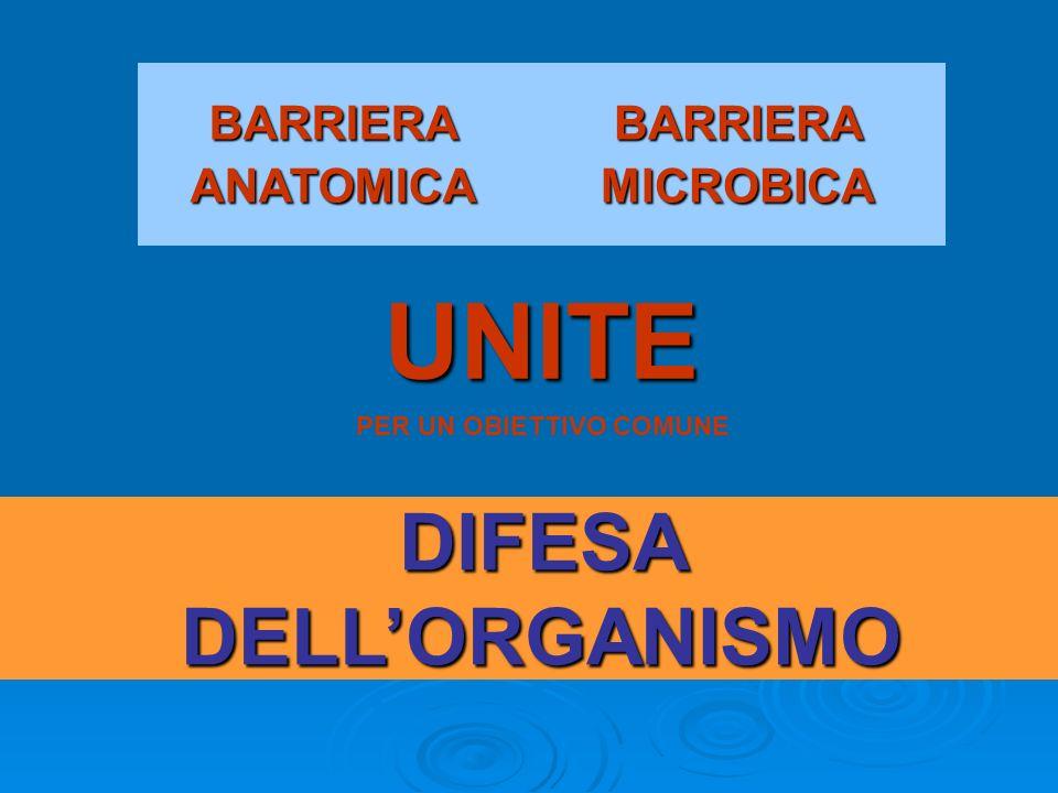 BARRIERA ANATOMICA BARRIERA MICROBICA UNITE PER UN OBIETTIVO COMUNE DIFESA DELLORGANISMO