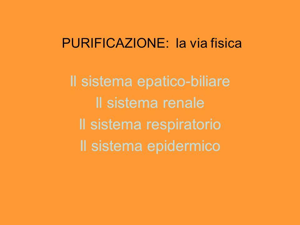PURIFICAZIONE: la via fisica Il sistema epatico-biliare Il sistema renale Il sistema respiratorio Il sistema epidermico