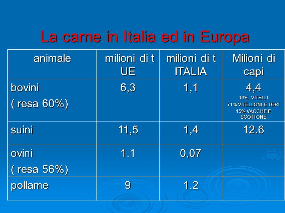 La carne in Italia ed in Europa La carne in Italia ed in Europa animale milioni di t UE milioni di t UE milioni di t ITALIA Milioni di capi bovini ( resa 60%) 6,31,14,4 13% VITELLI 71% VITELLONI E TORI 15% VACCHE E SCOTTONE suini11,51,412.6 ovini ( resa 56%) 1.10,07 pollame91.2