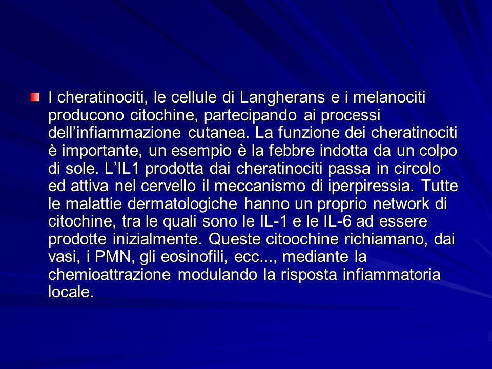 I cheratinociti, le cellule di Langherans e i melanociti producono citochine, partecipando ai processi dellinfiammazione cutanea. La funzione dei cher