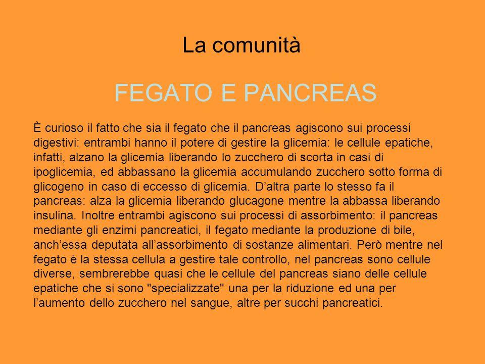 La comunità FEGATO E PANCREAS È curioso il fatto che sia il fegato che il pancreas agiscono sui processi digestivi: entrambi hanno il potere di gestir