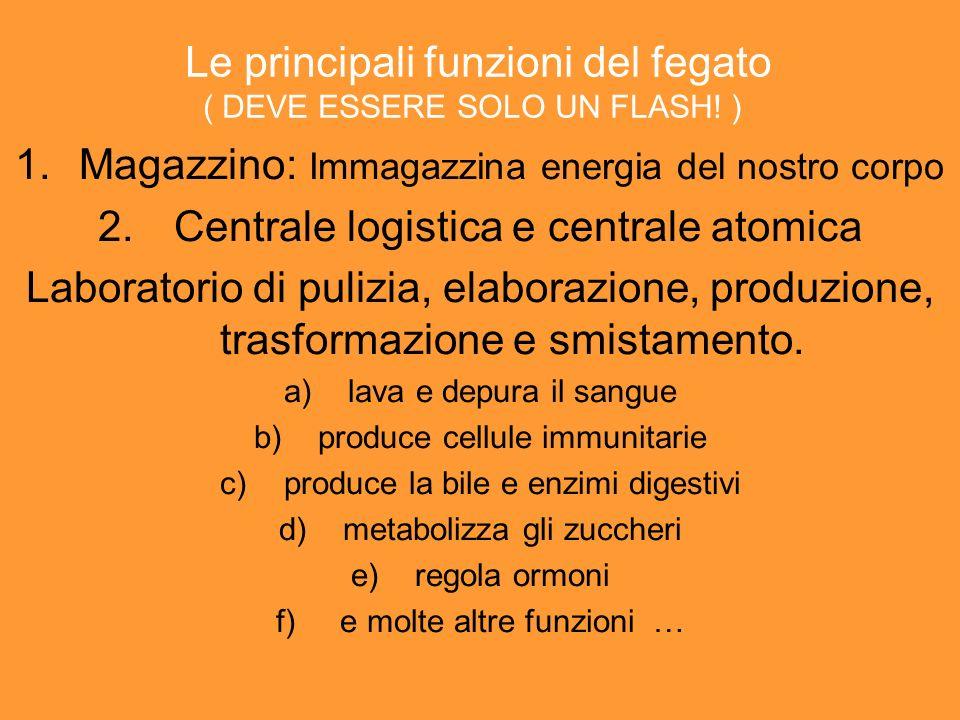 La comunità FEGATO e POLMONE la relazione fra questi due organi riflette la relazione tra energia e sangue.