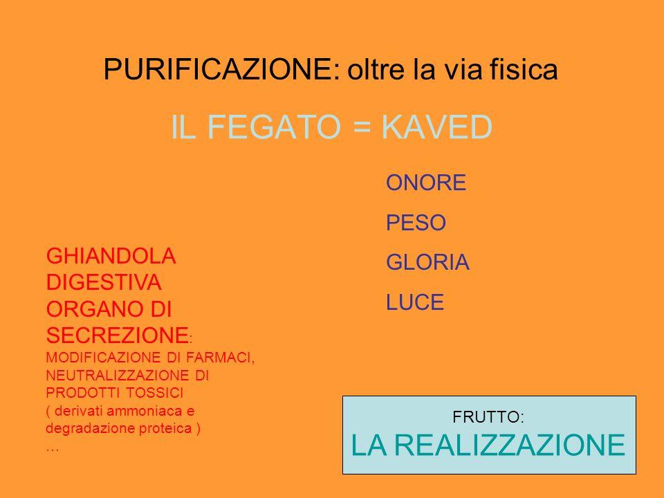 PURIFICAZIONE: oltre la via fisica IL FEGATO = KAVED GHIANDOLA DIGESTIVA ORGANO DI SECREZIONE : MODIFICAZIONE DI FARMACI, NEUTRALIZZAZIONE DI PRODOTTI