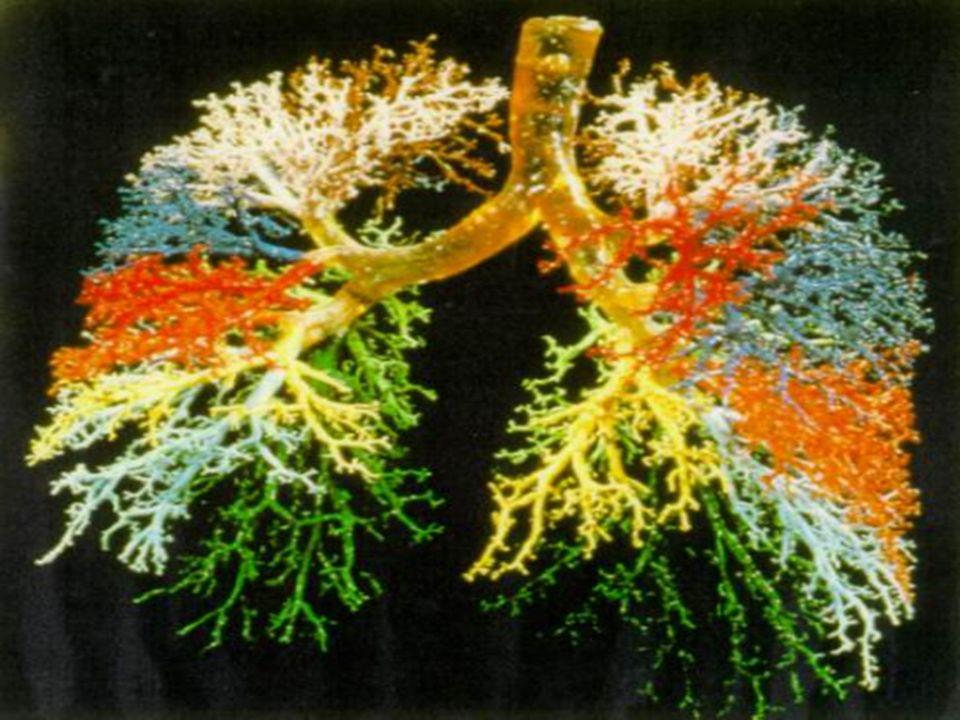 respirzione La buona ossigenazione delle cellule attraverso degli esercizi adatti, che attivano la circolazione, alternati a dei periodi di riposo, il tutto unito ad un sonno profondo e ristoratore,/ sono importanti ai fini di un corretto funzionamento del sistema immunitario.