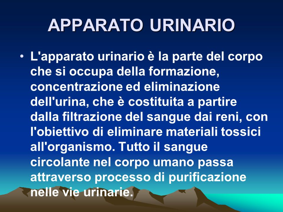 APPARATO URINARIO L apparato urinario è la parte del corpo che si occupa della formazione, concentrazione ed eliminazione dell urina, che è costituita a partire dalla filtrazione del sangue dai reni, con l obiettivo di eliminare materiali tossici all organismo.