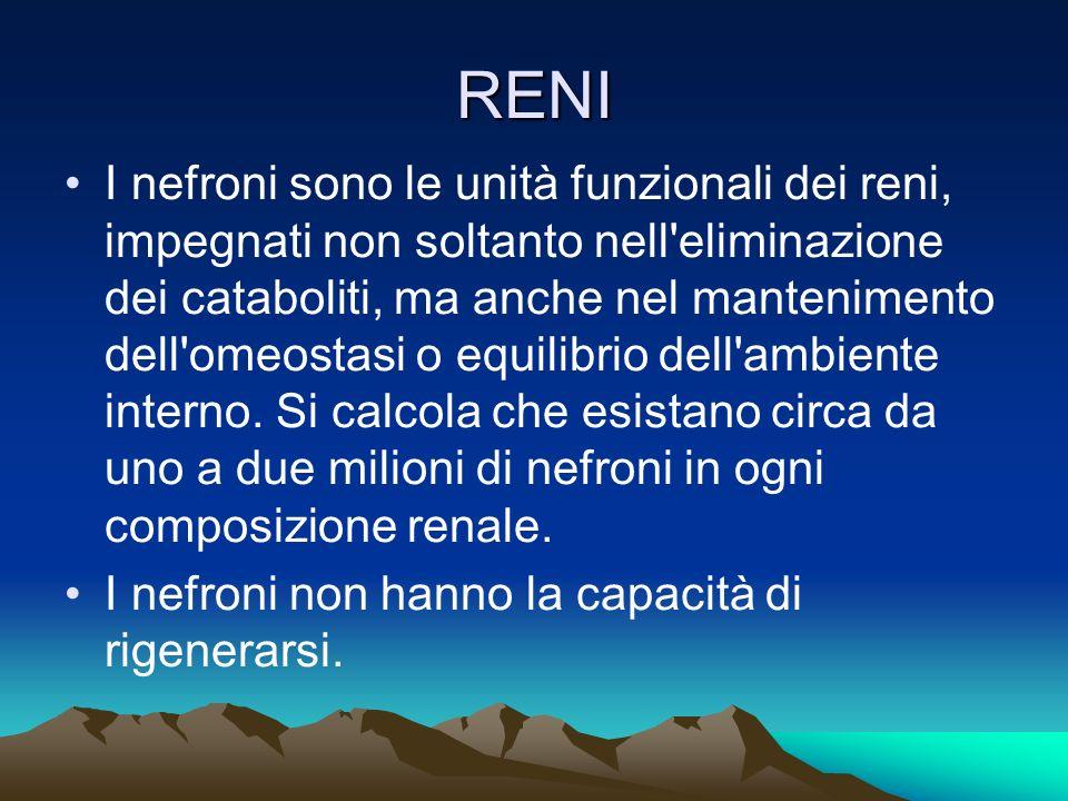 RENI I nefroni sono le unità funzionali dei reni, impegnati non soltanto nell eliminazione dei cataboliti, ma anche nel mantenimento dell omeostasi o equilibrio dell ambiente interno.