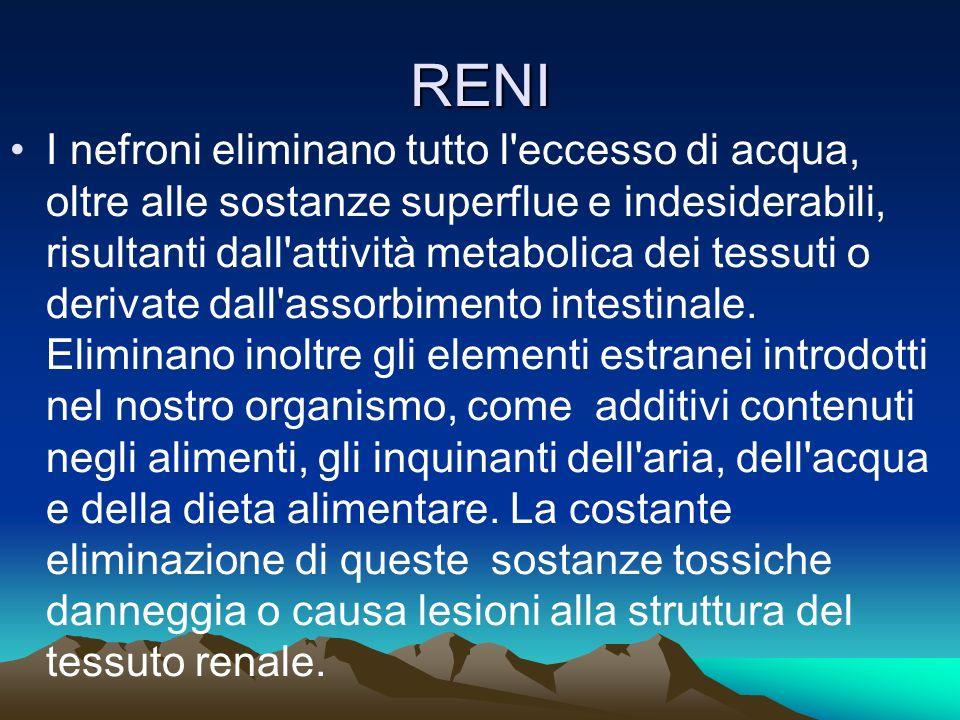 RENI I nefroni eliminano tutto l eccesso di acqua, oltre alle sostanze superflue e indesiderabili, risultanti dall attività metabolica dei tessuti o derivate dall assorbimento intestinale.