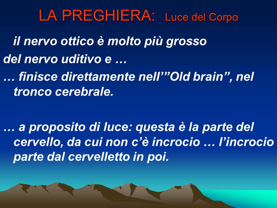 LA PREGHIERA: Luce del Corpo il nervo ottico è molto più grosso del nervo uditivo e … … finisce direttamente nellOld brain, nel tronco cerebrale. … a