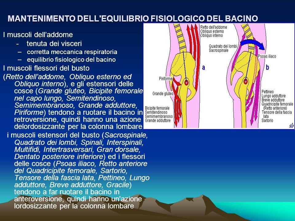 MANTENIMENTO DELL'EQUILIBRIO FISIOLOGICO DEL BACINO I muscoli delladdome - tenuta dei visceri –corretta meccanica respiratoria –equilibrio fisiologico