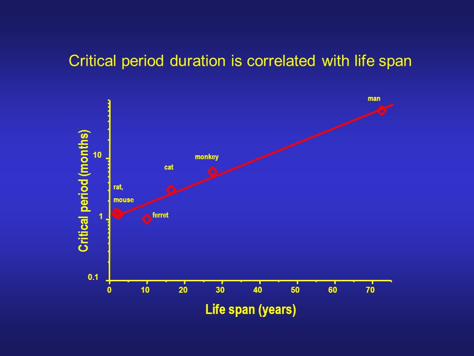 Critical period duration is correlated with life span 010203040506070 0.1 1 10 man monkey cat ferret rat, mouse Life span (years) Critical period (mon